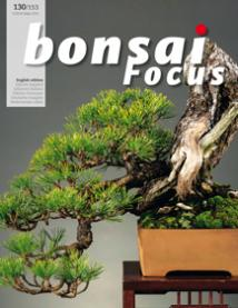 Bonsai Focus, 2007